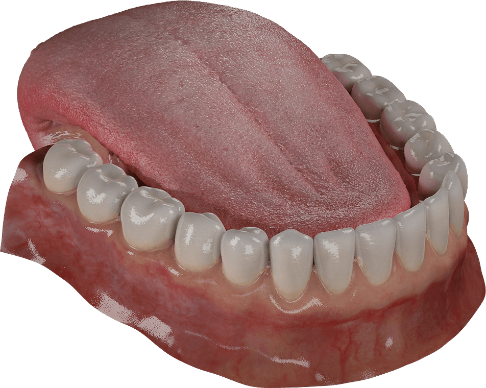 Free 3D Teeth Model | 3D Gladiator